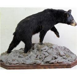 Small black bear mount