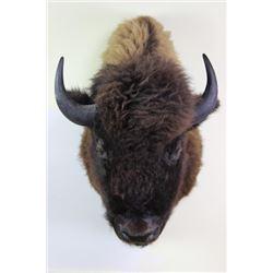 Large bull buffalo mount