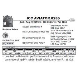 ICC AVIATOR 8285