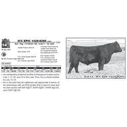 ICC EPIC 1429-8260 (NHF)