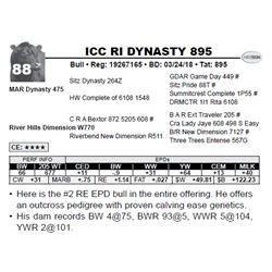 ICC RI DYNASTY 895