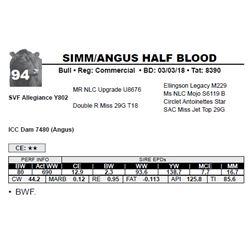 SIMM/ANGUS HALF BLOOD