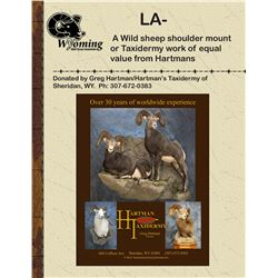 Hartman Taxidermy-Wild Sheep Shoulder Mount