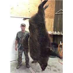 FLORIDA – 1.5 DAY WILD BOAR HUNT WITH BAY DOGS FOR 4 HUNTERS
