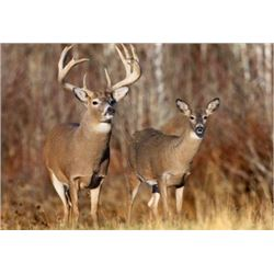 KANSAS - 5 DAYS/6 NIGHTS TROPHY WHITETAIL DEER HUNT FOR ONE HUNTER