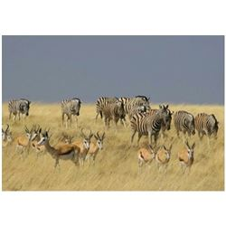 NAMIBIA - SEVEN DAY BLAST & CAST SAFARI FOR ONE HUNTER