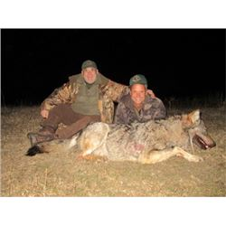 MACEDNIA - WOLF HUNT WITH RIFLE FOR 2 HUNTERS