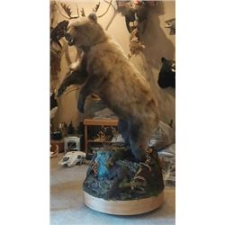 $1000 GIFT CERTIFICATE FOR TAXIDERMY WORK