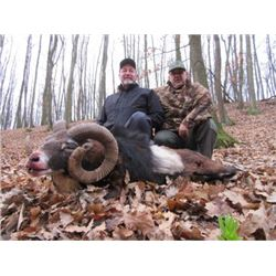SERBIA - MOUFLON SHEEP HUNT WITH RIFLE FOR 2 HUNTERS