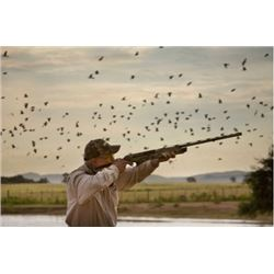 ARGENTINA - THREE DAY DOVE HUNT FOR TWO HUNTERS