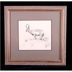 Original Ron Bailey Framed Pronghorn Pencil Sketch