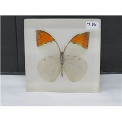 "PAPER WEIGHT - BUTTERFLY *3.5"" X 3.5"""