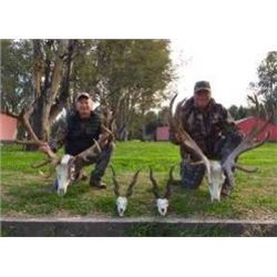 Southern Lodges Argentina 6 day Big Game and Dove Hunt for 2 Hunters