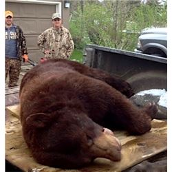 Canadian Black Bear or Cinnamon Black Bear in Ontario for 1 Hunter with KapRiver Outfitters