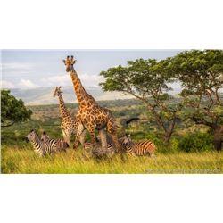 Zulu Nyala Photo Safari in South Africa