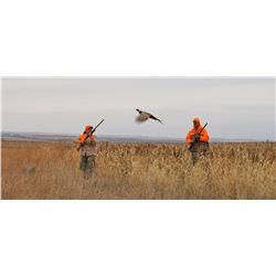 1 Day Howard South Dakota Pheasant Hunt for 10 guys, includes 35-40 pheasant, no lodgning included,