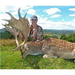 Trophy Red deer hunt  OR a Trophy Fallow deer hunt OR  a Trophy Mouflon sheep hunt  (hunter´s choice