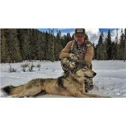 7 day wolf hunt in Salmon Idaho, for 1 hunter