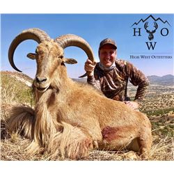 3.5 day 4 night west Texas free Range Aoudad hunt for 2 hunters in February or March of 2020 include