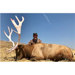 7 day California Trophy Tule Elk Hunt for 1 hunter, includes meals, lodging in a private house, airp
