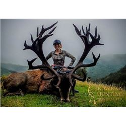 4 day new zealand red stag hunt for stag up to 340