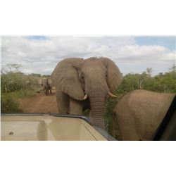 8 days south africa, 4 hunting days, 2 photographic safari days, 2 airport pickup, first hunter will