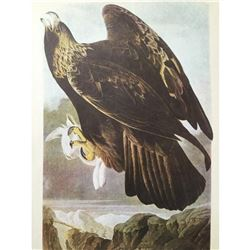 c1946 Audubon Print, #181 Golden Eagle