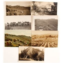 Real Photo Postcards  (88268)