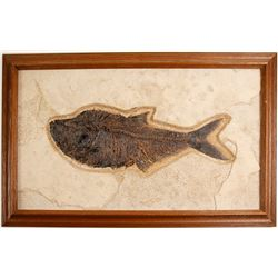 Green River Fish Fossil  (57839)