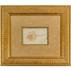 Baby Stingray Fossil  (43852)