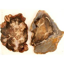 Polished Petrified Wood Slabs (2)  (87367)