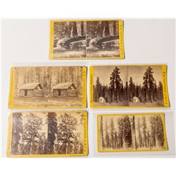 Five Big Trees Stereoviews, E. & H.T. Anthony & Co.  (54752)
