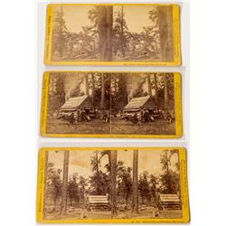 Yosemite Stereoview Collection: Three Different of Lamon's Cabin  (50680)