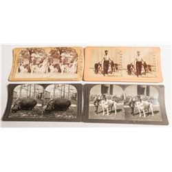 Animal & Pet Stereoviews  (54705)