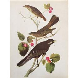 c1946 Audubon Print, #419 Thrush, Solitaire & Jay