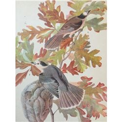 c1946 Audubon Print, #107 Canada Jay