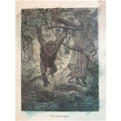 19thc Engraving, Jungle Gorilla Ape