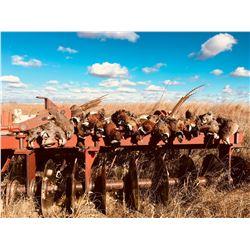 2 Day Pheasant Hunt for 4 Hunters in Araphoe, Nebraska