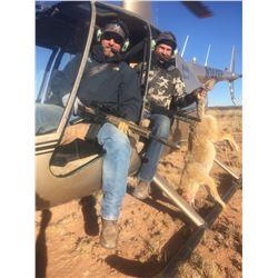 4 Hour Helicopter Hog Hunt for 2-4 Hunters