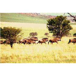 7 Day 8 Night South Africa Safari for 1 Hunter