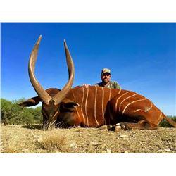 Mature Bongo Hunt
