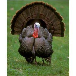 2 Day 2 Person Semi-Guided Turkey Hunt