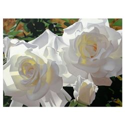 White Radiant Roses by Davis, Brian