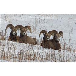 $5,000.00 Credit for Bighorn, Moose, Goat, Cougar