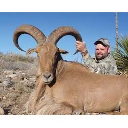 Choice of Aoudad, Sika or Mouflon