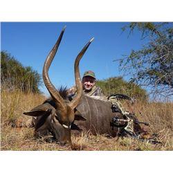 2 NYALA Bulls Plus Night Hunting for Wild Cats