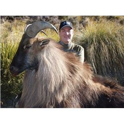 TROPHY BULL TAHR HUNT NEW ZEALAND