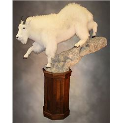 $1,000.00 Taxidermy Credit