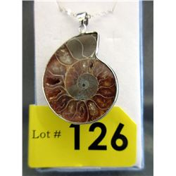 Museum Size Ammonite Pendant with Chain