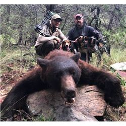 Arizona Black Bear Hunt